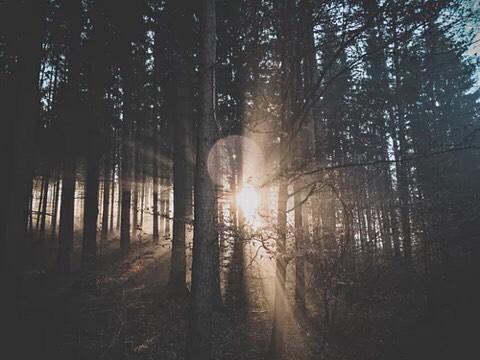 silenece in forest.jpg