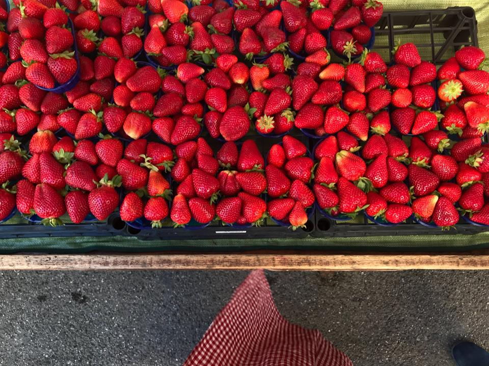 Strawberry Picking in Italy with Yogascapes- can't get more earth to mouth than this.