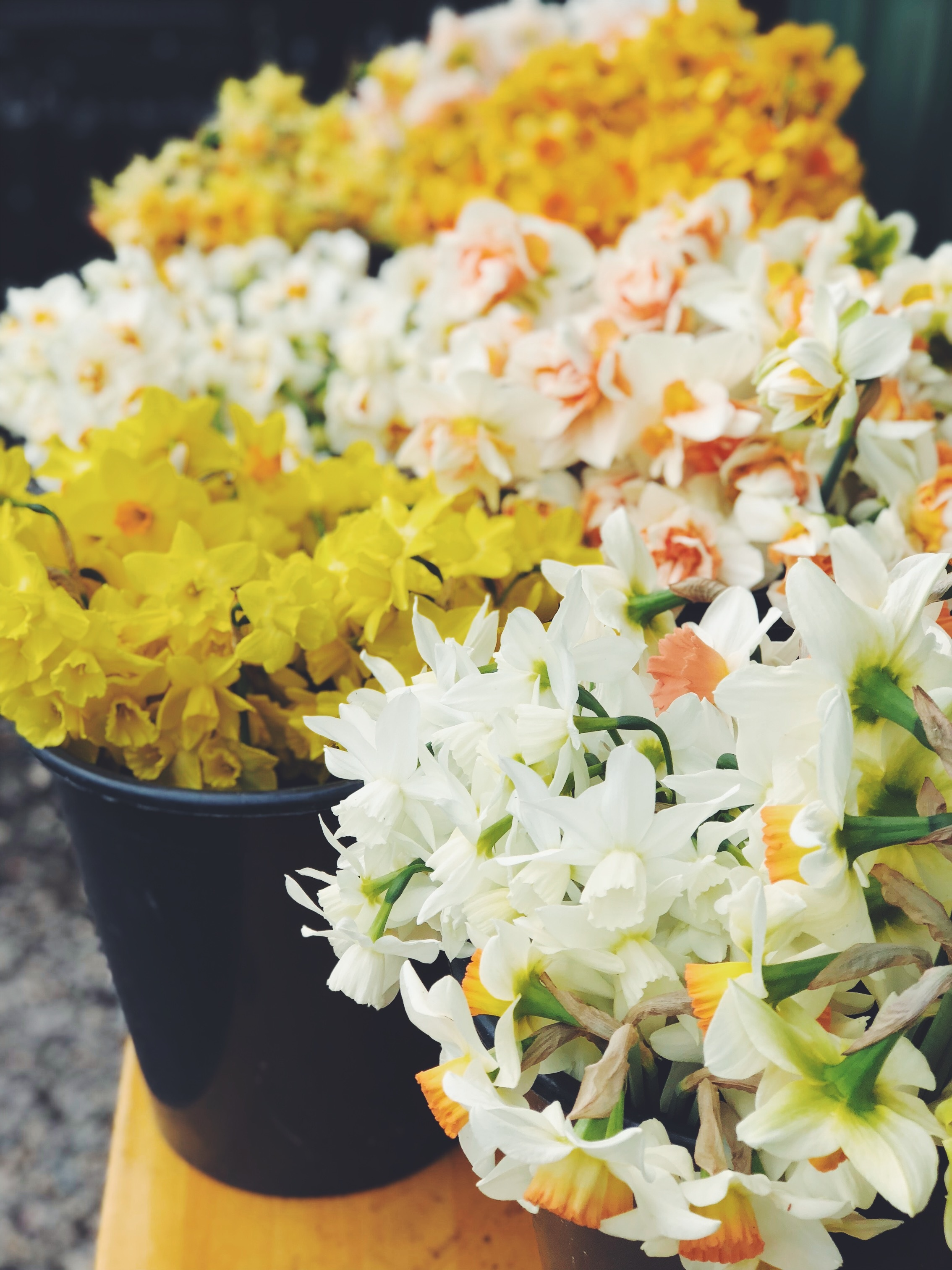 SUPPORT LOCAL FLOWERS - SEASONAL AND SUSTAINABLY GROWN, WITH NO PESTICIDES OR HERBICIDES.