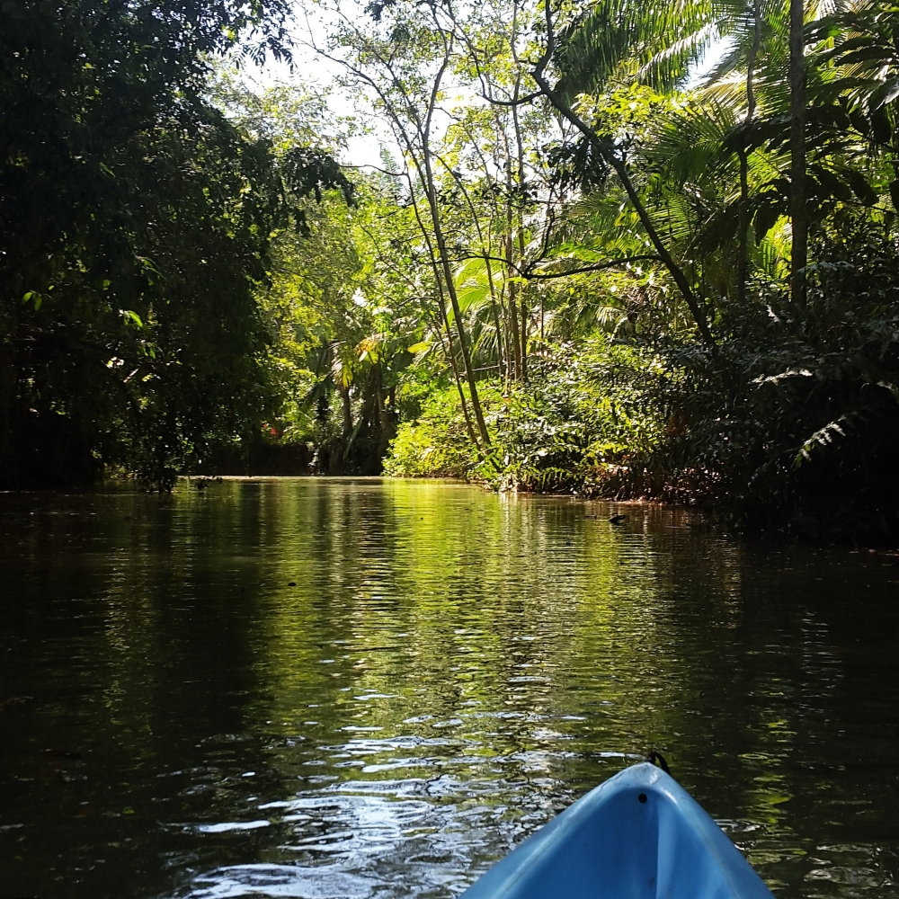 Kayaking in the mangroves of Manuel Antonio