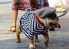 french+bulldog.jpg