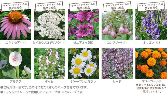 Colorful snapshot of gorgeous greenery included in Chant a Charm products. (Image and cover product image are the property of Chant a Charm. Click through to source)