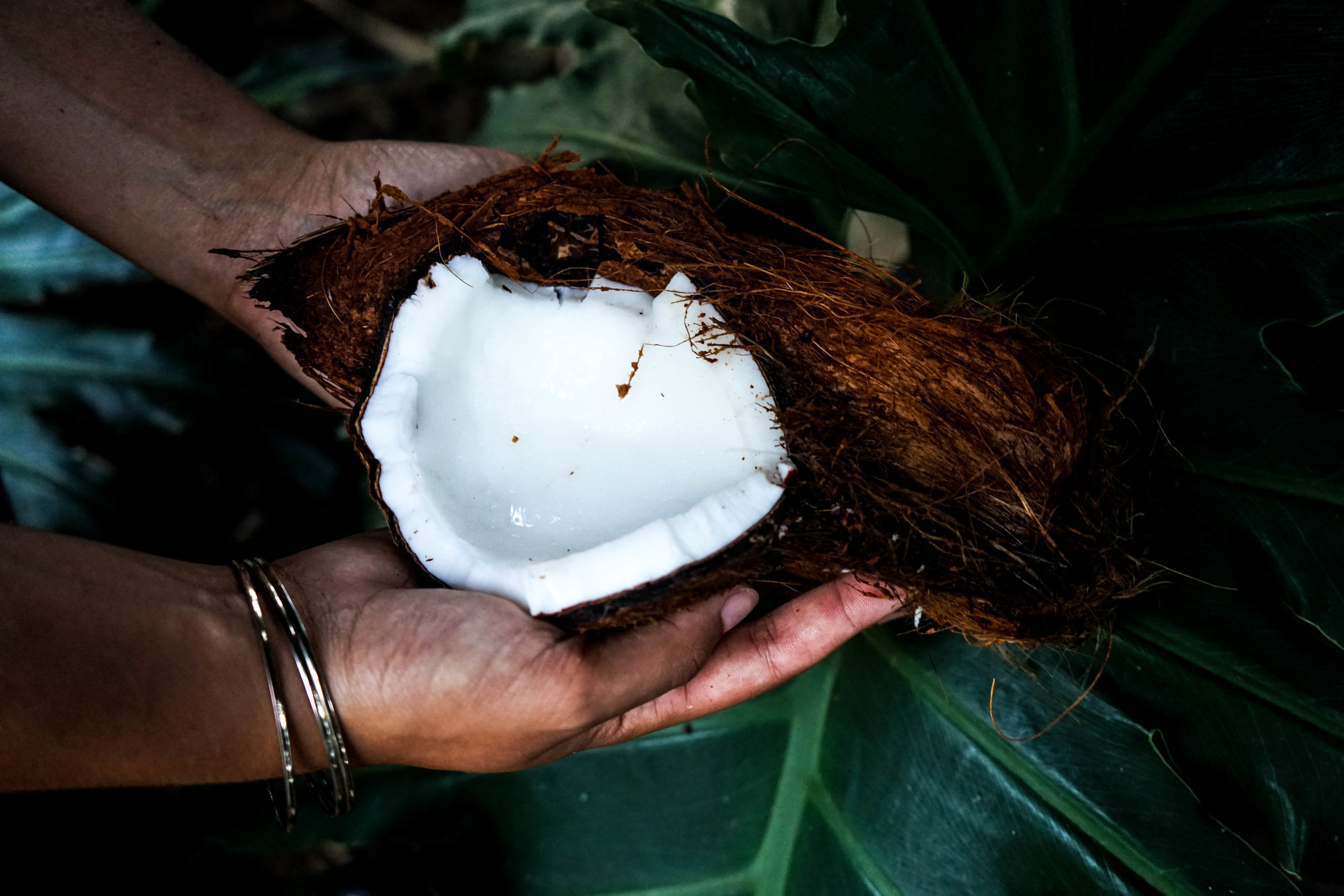 Coconut Oil - Coconut Oil is beloved worldwide! Latin American women grow up using it for everything, including nail care, skin care, hair care, and tasty recipes.