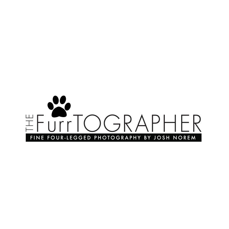 furrtographer.jpg