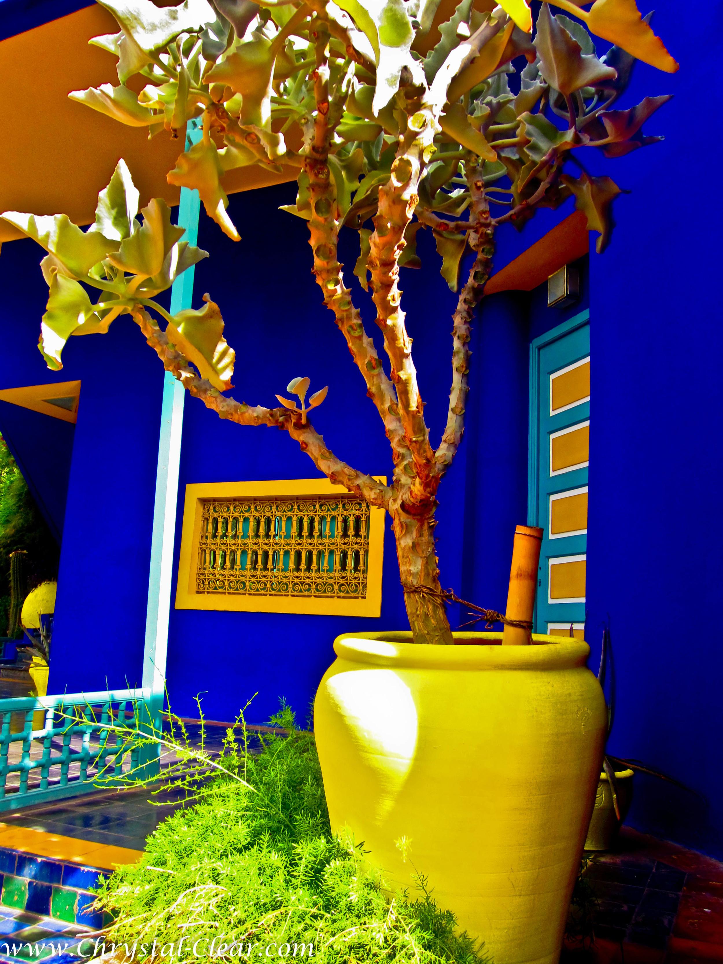 Marrakech-Majorelle-Gardens-9.jpg