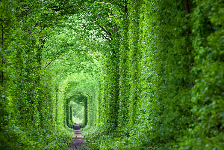 The-Tunnel-of-Love-Ukraine.jpg