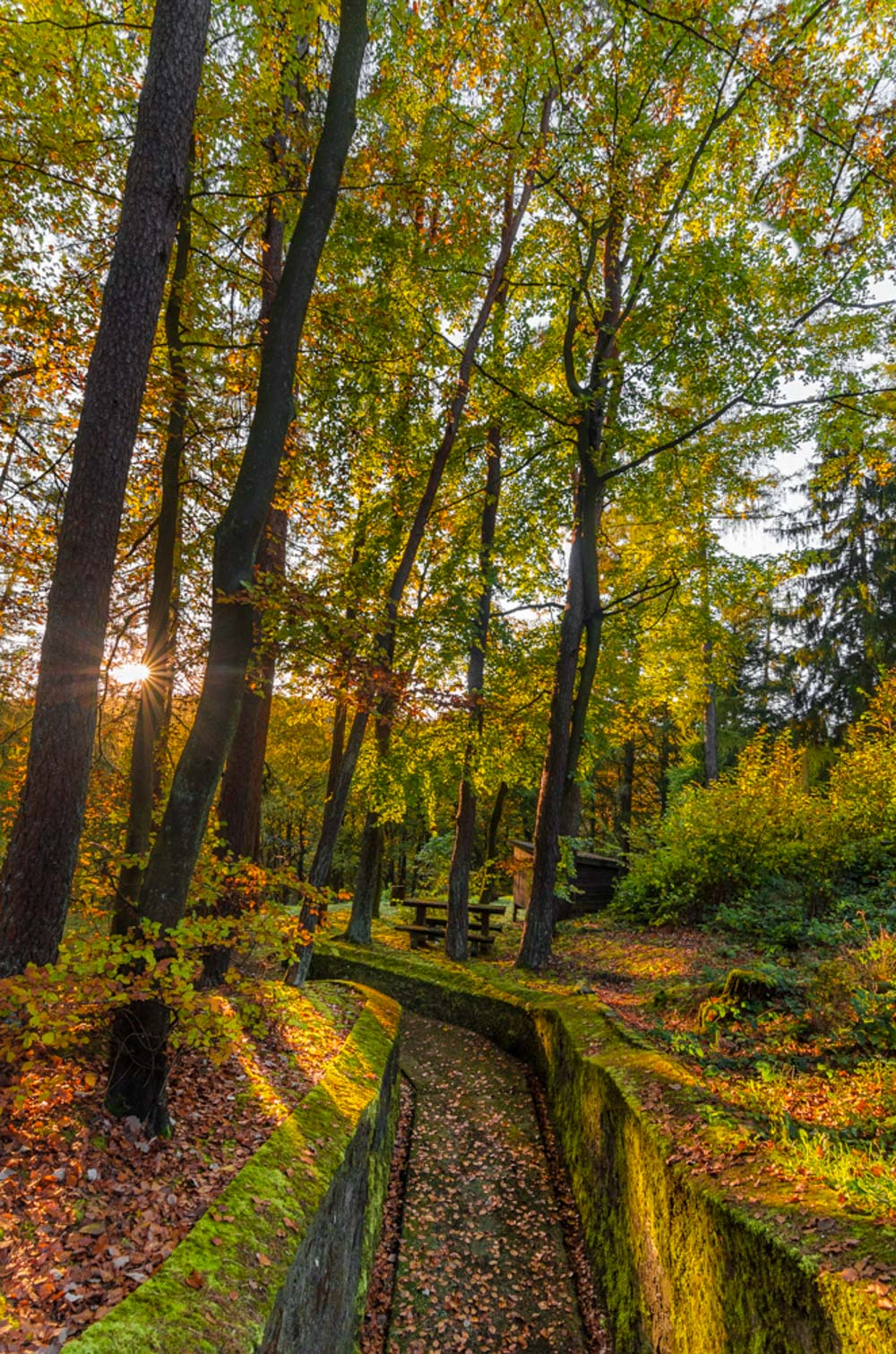 Fall colors Catalin Burlacu Luxembourg Photographer        .JPG