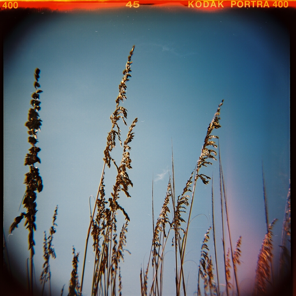 Dune Grass, Early Morning, St. Augustine Beach. Kodak Portra 400.