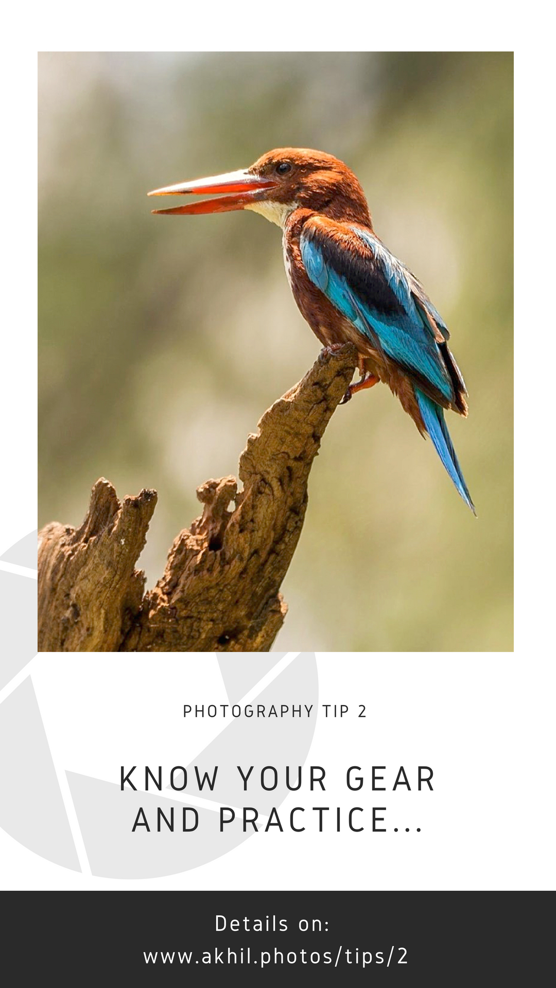 This White-throated Kingfisher image was shot many years ago when I was just starting wildlife photography with a 70-300mm lens and 500D body. The image was shot at noon and hence the bright patch of light on the beak.