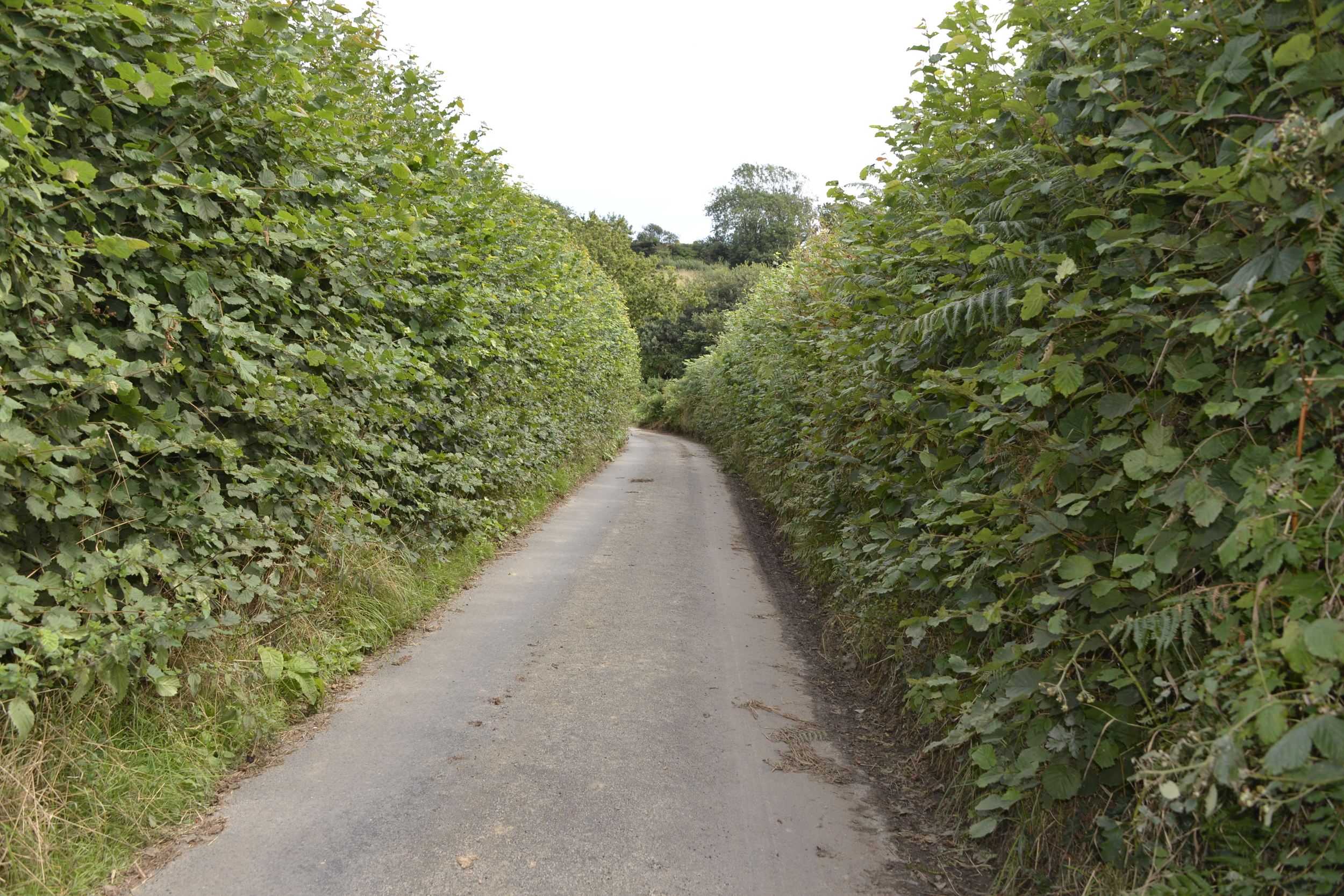 A narrow road in Cornwall