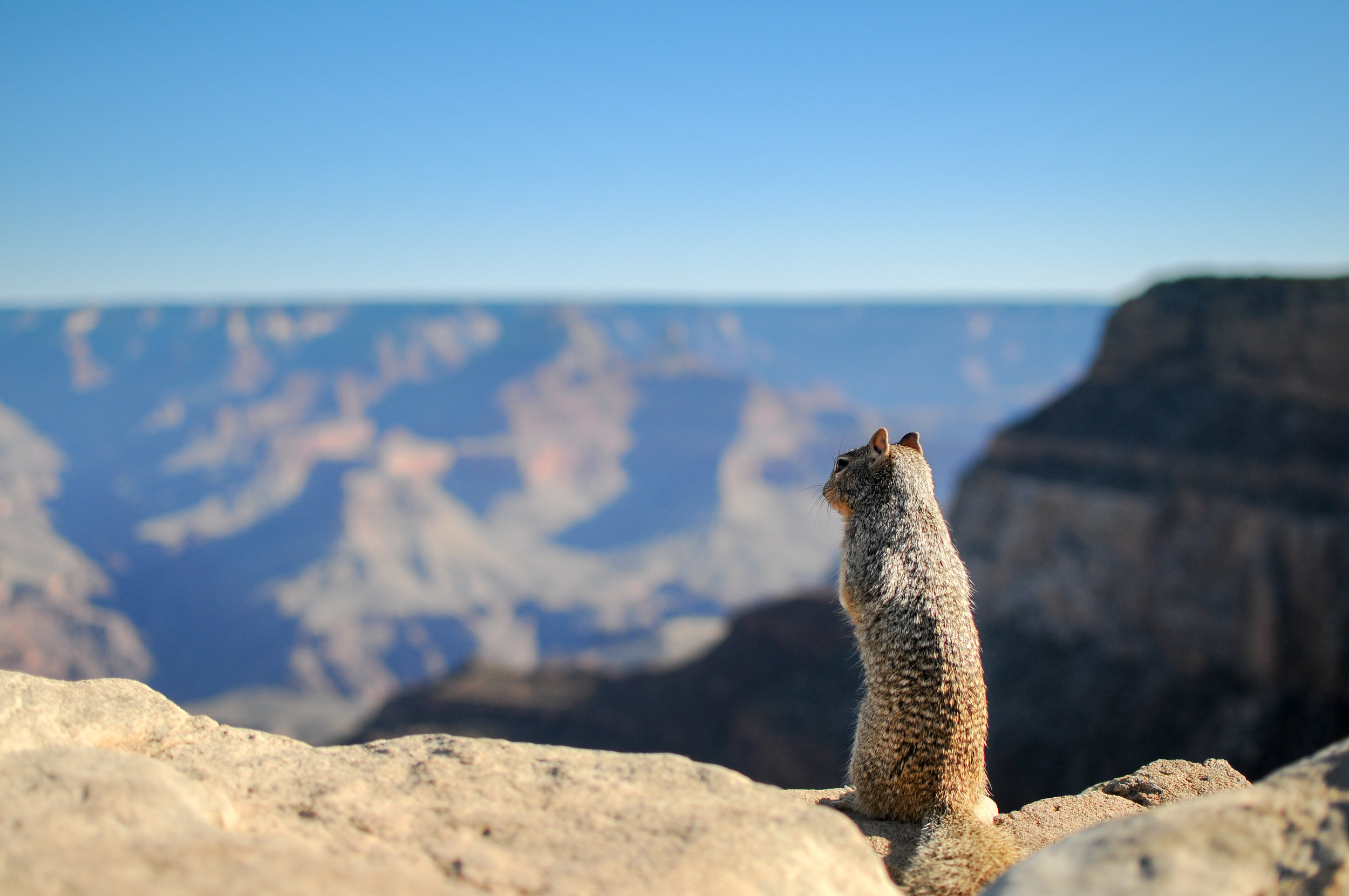 Squirrel! Where?