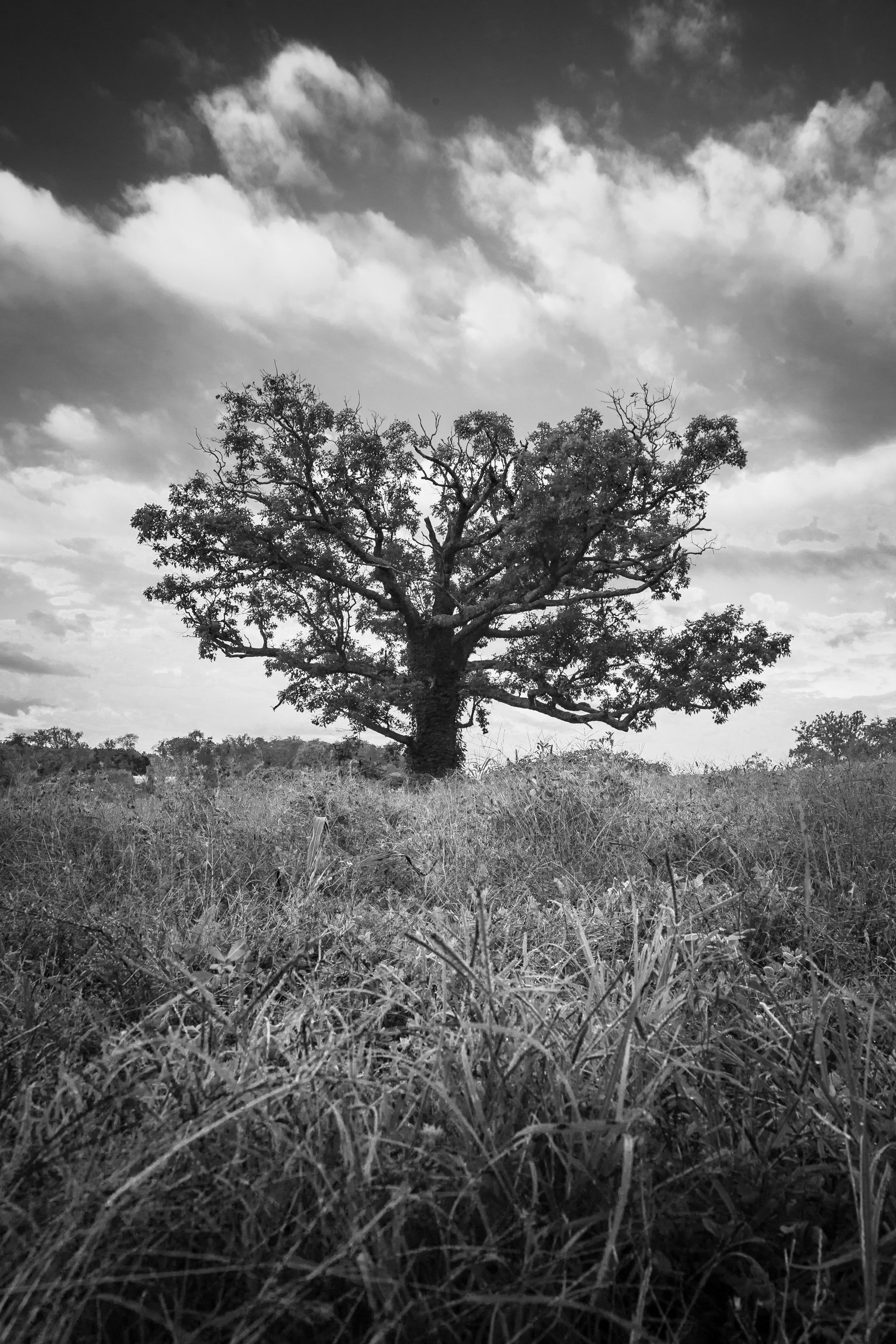 """Another view of """"Merry Oak"""" facing west from a lower perspective."""