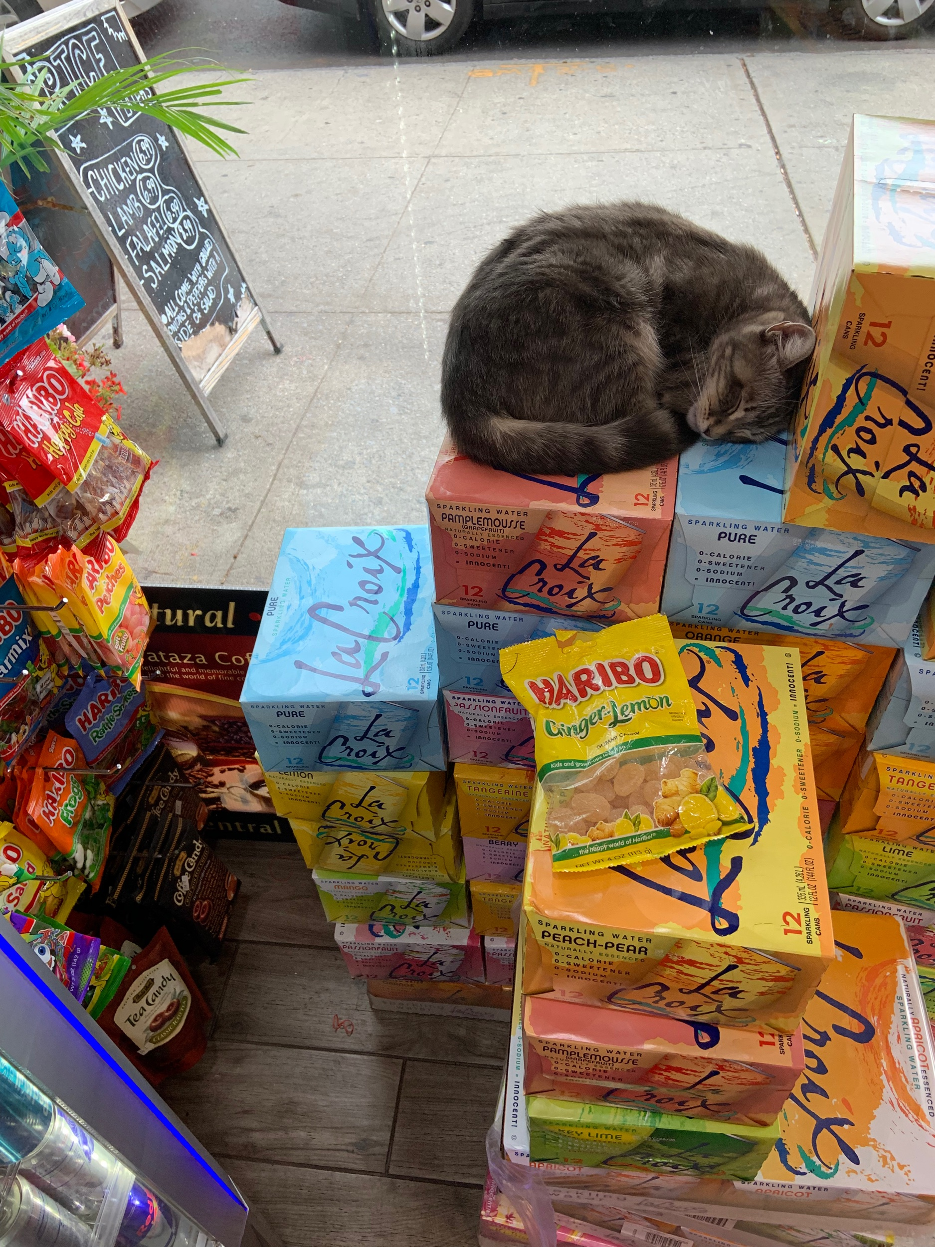 Pamplemousse the bodega cat showing us all how it's done.