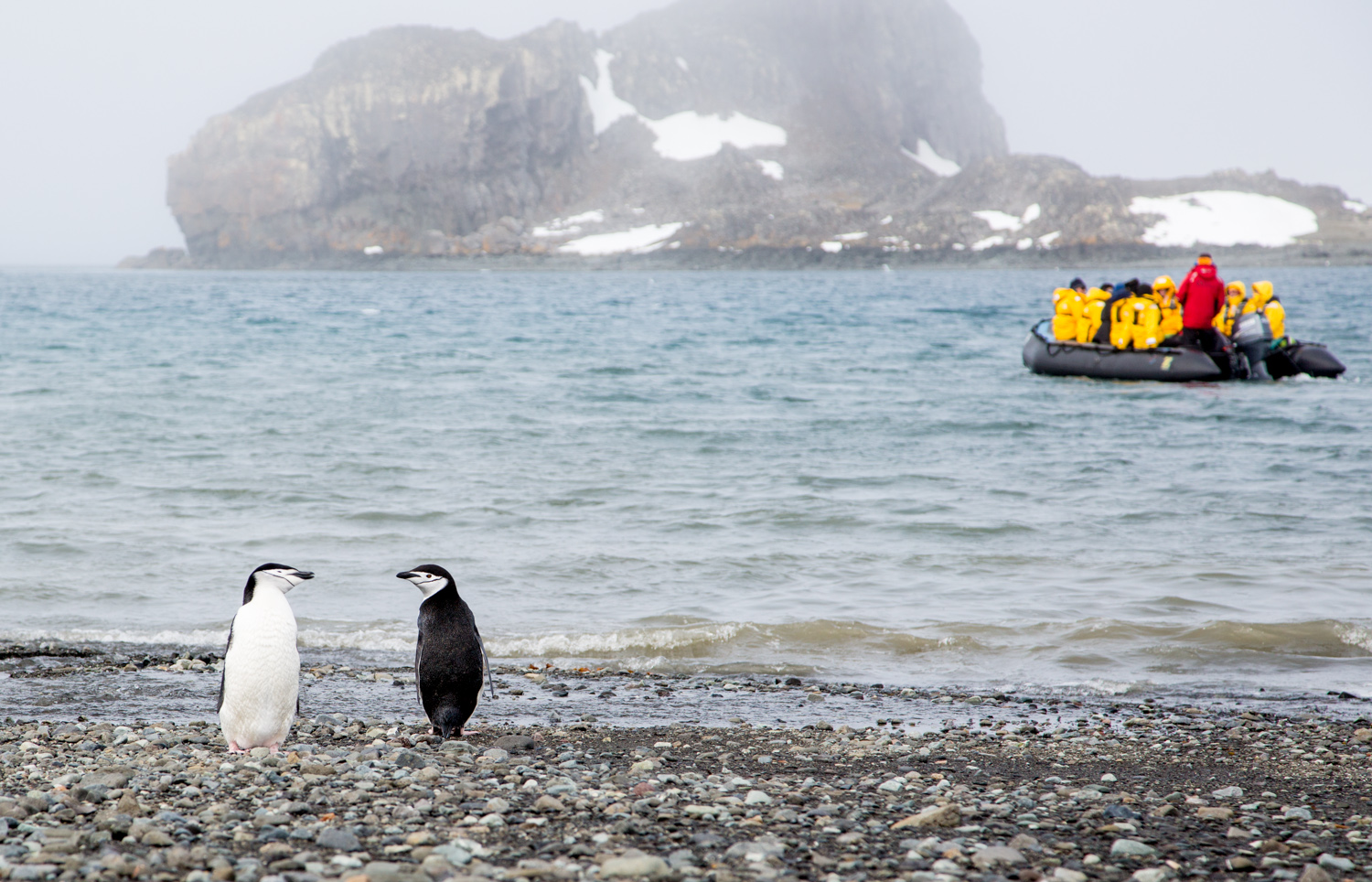 Chinstrap penguins on King George Island, South Shetland Islands, just north of the Antarctic Peninsula.