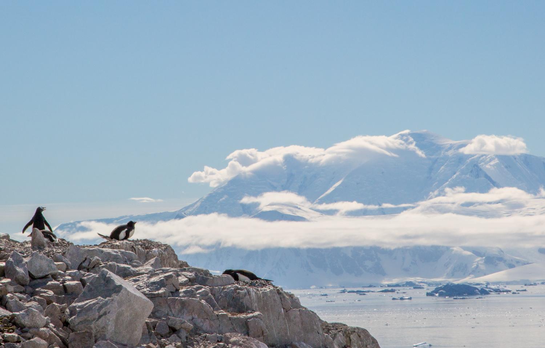 Penguins in Neko Harbor, Antarctic Peninsula.
