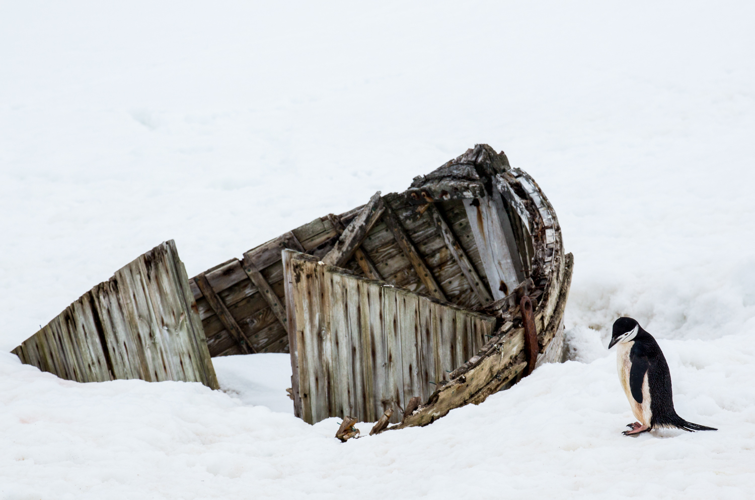 Wreck of an old whaling ship on Half Moon Island.