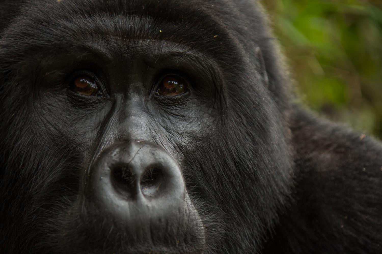 20140821-Uganda-2523.jpg