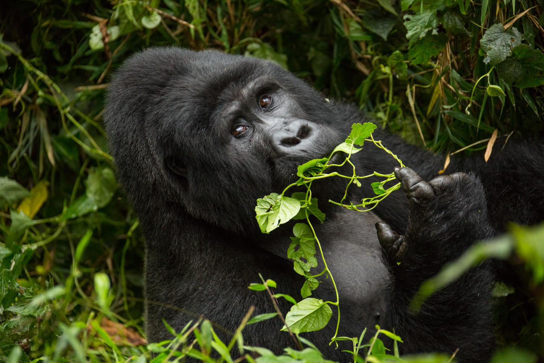 20140821-Uganda-2345.jpg
