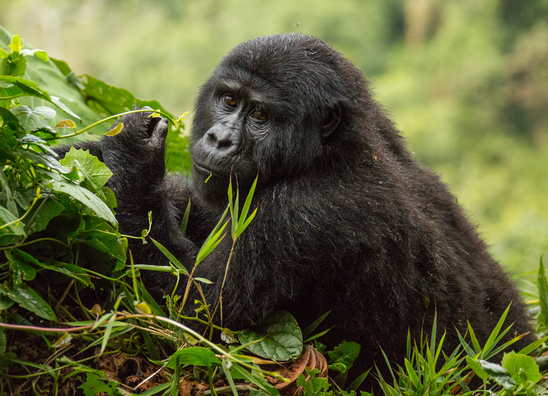20140821-Uganda-2431.jpg
