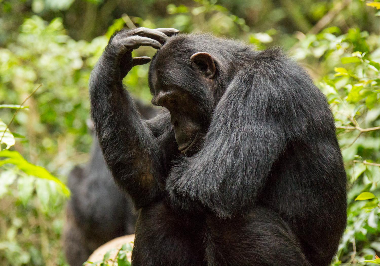 20140818-Uganda-1045.jpg