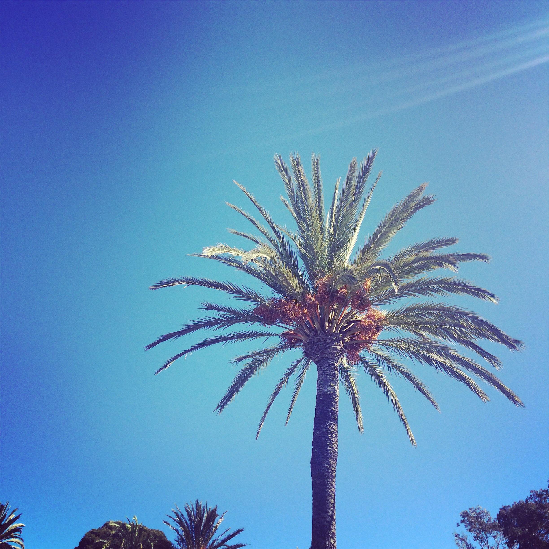 Palm Trees in Malaga