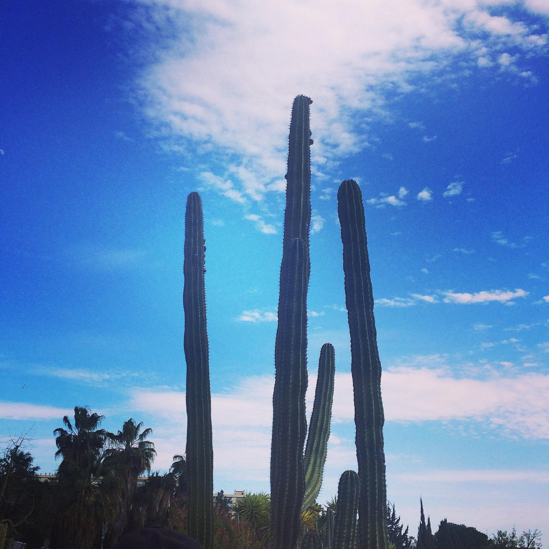 The amazing Cactus Garden
