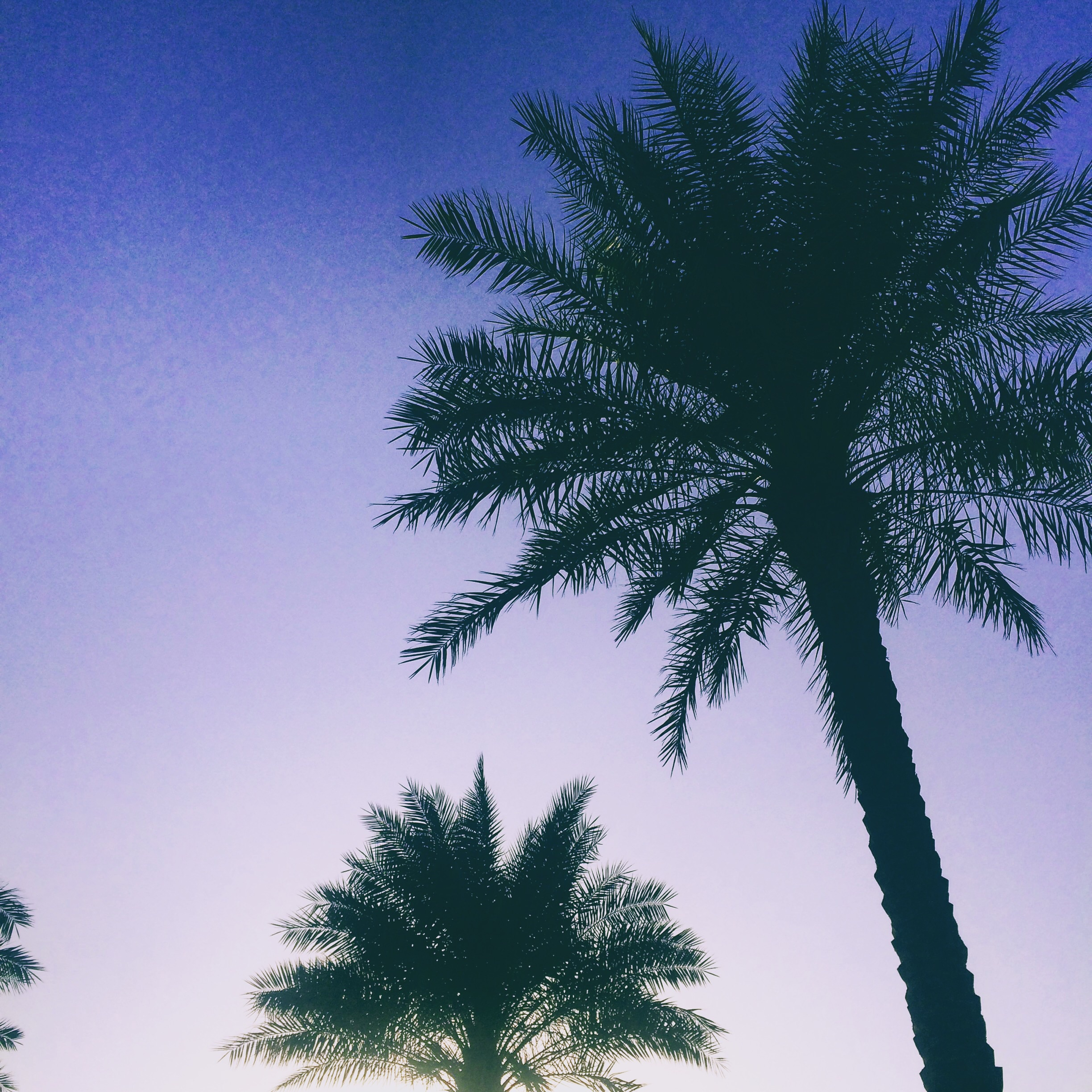 Palm Trees in Dubai