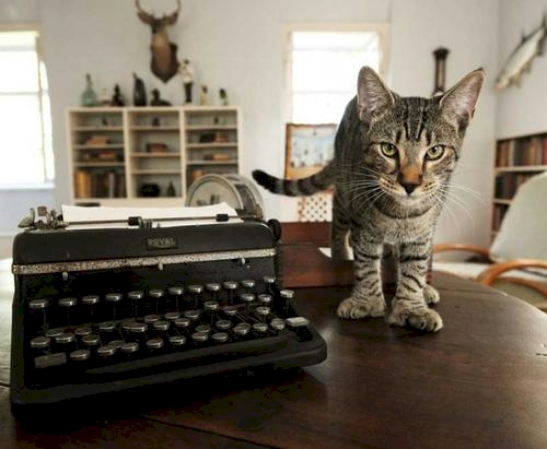 A polydactyl cat in Hemingway's Key West writer's studio