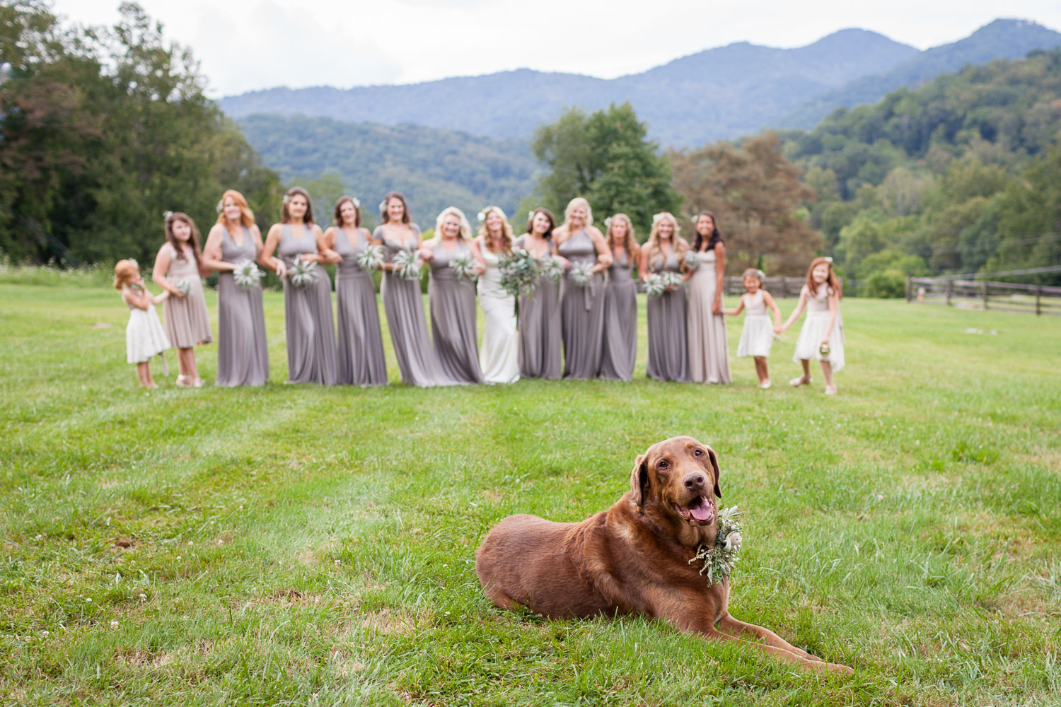 Sometimes photography on your wedding day can start to feel a bit too serious, and there's nothing a like a dog to lighten the mood a little and put a smile on your face. This started out as a shot of the bride, Caroline, and her bridesmaids walking through a meadow together at the beautiful  Fields of Blackberry Cove . Suddenly Caroline's dog, Buddy, who was also in the wedding, just decided to walk right in front of my camera and take a seat! I guess he wanted to make sure he didn't get left out of the wedding album!