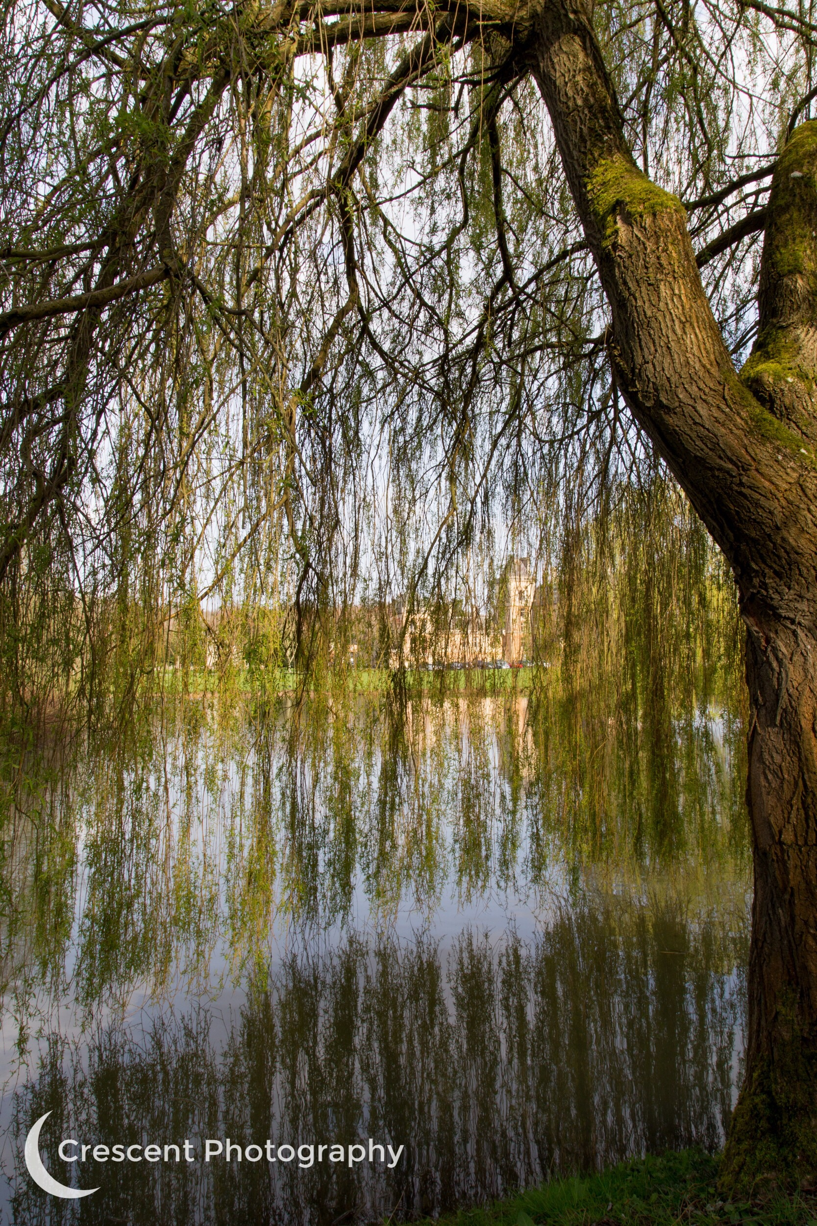 Willow Tree, Walton Hall
