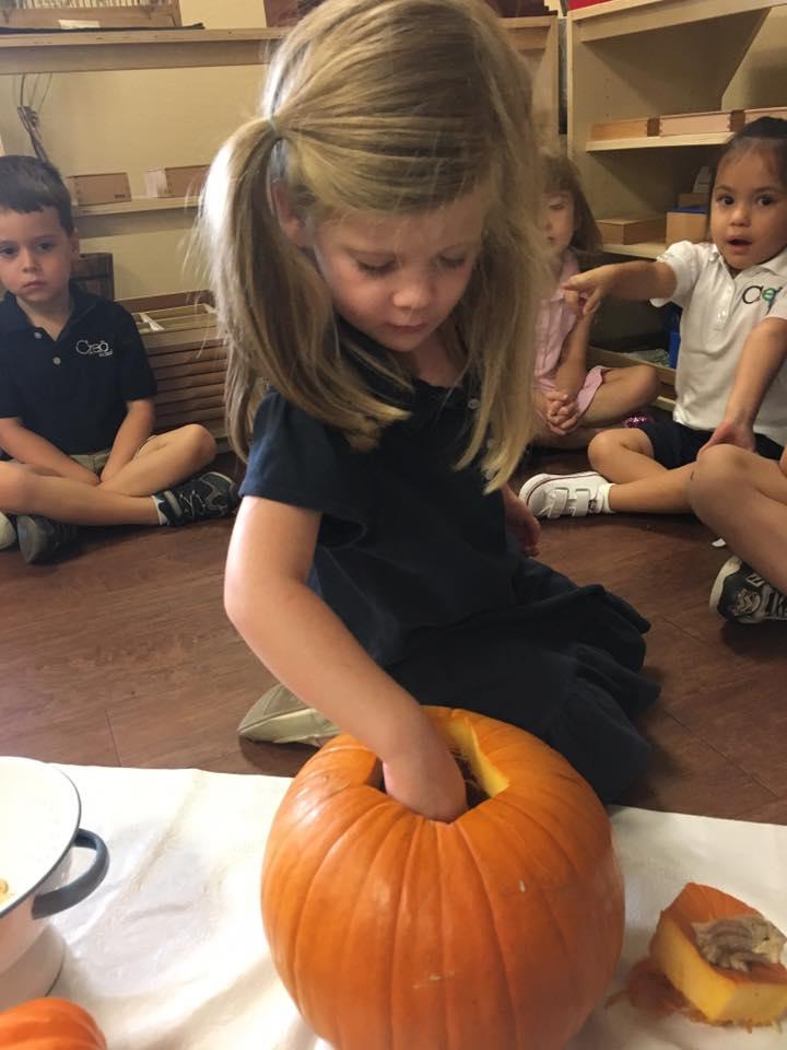 Parts of the Pumpkin