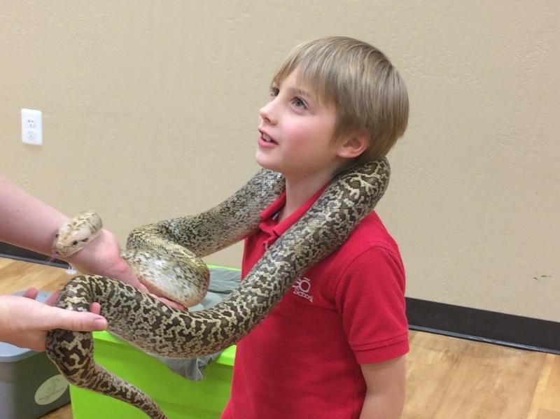 Going In - Radical Reptile Fun