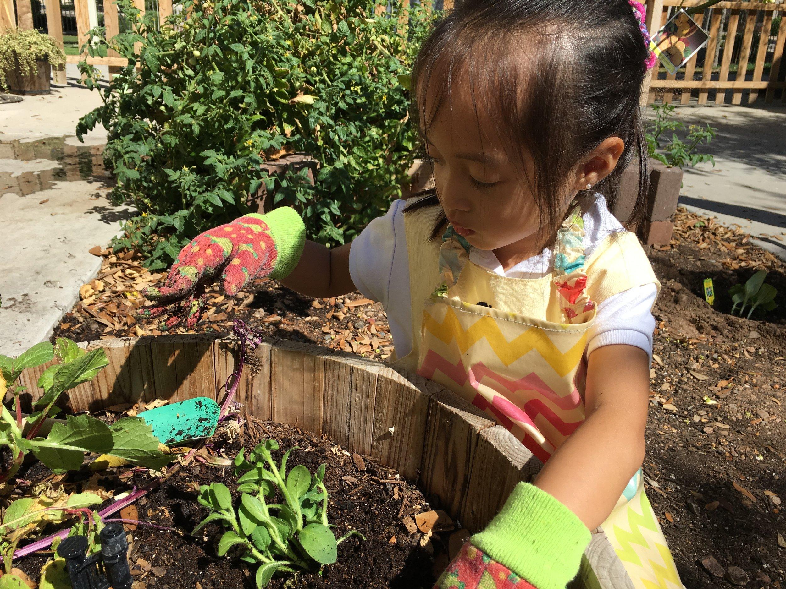 Planting a beautiful flower
