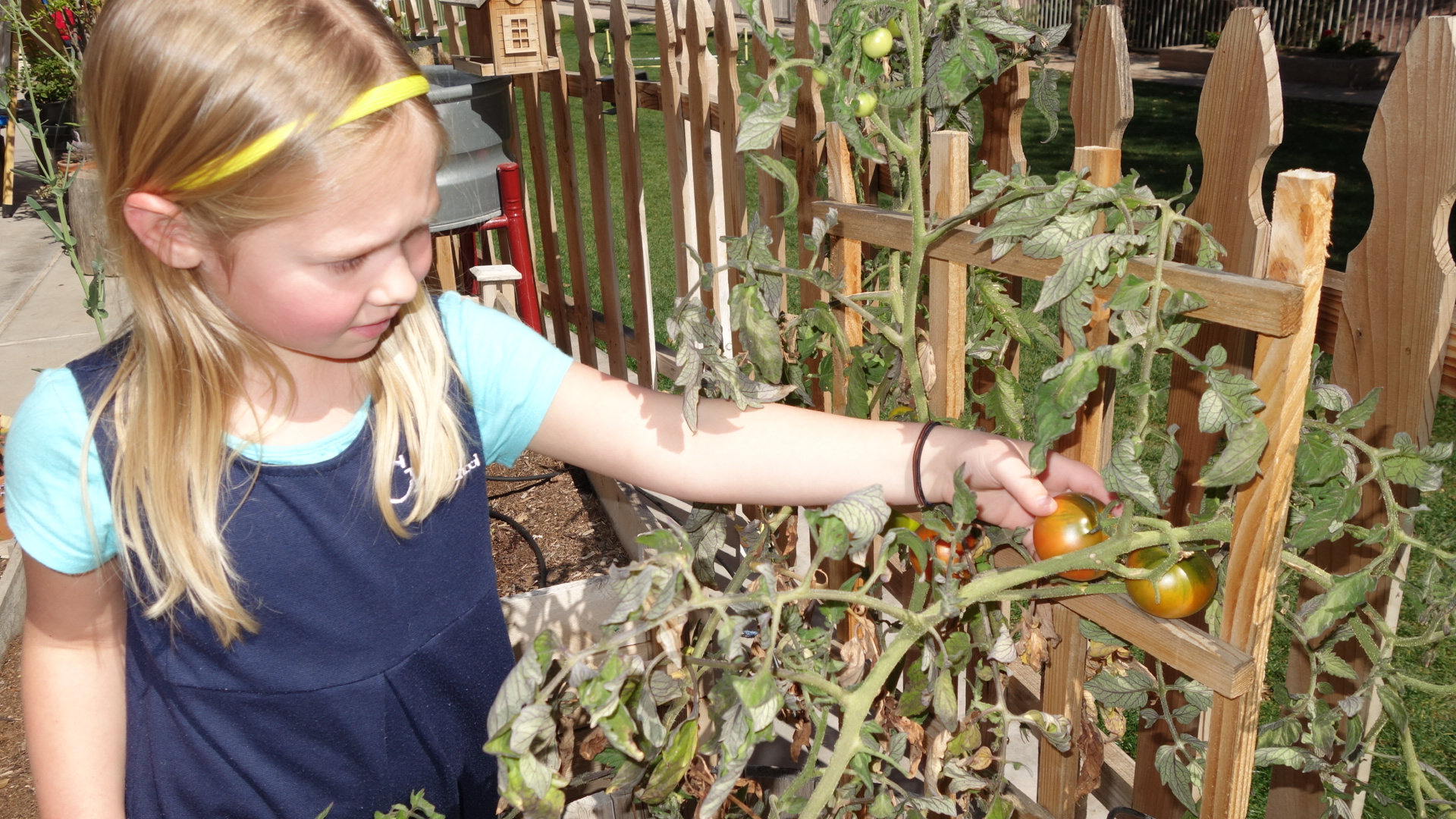 The wait is over when the children can get the first harvest of the year.