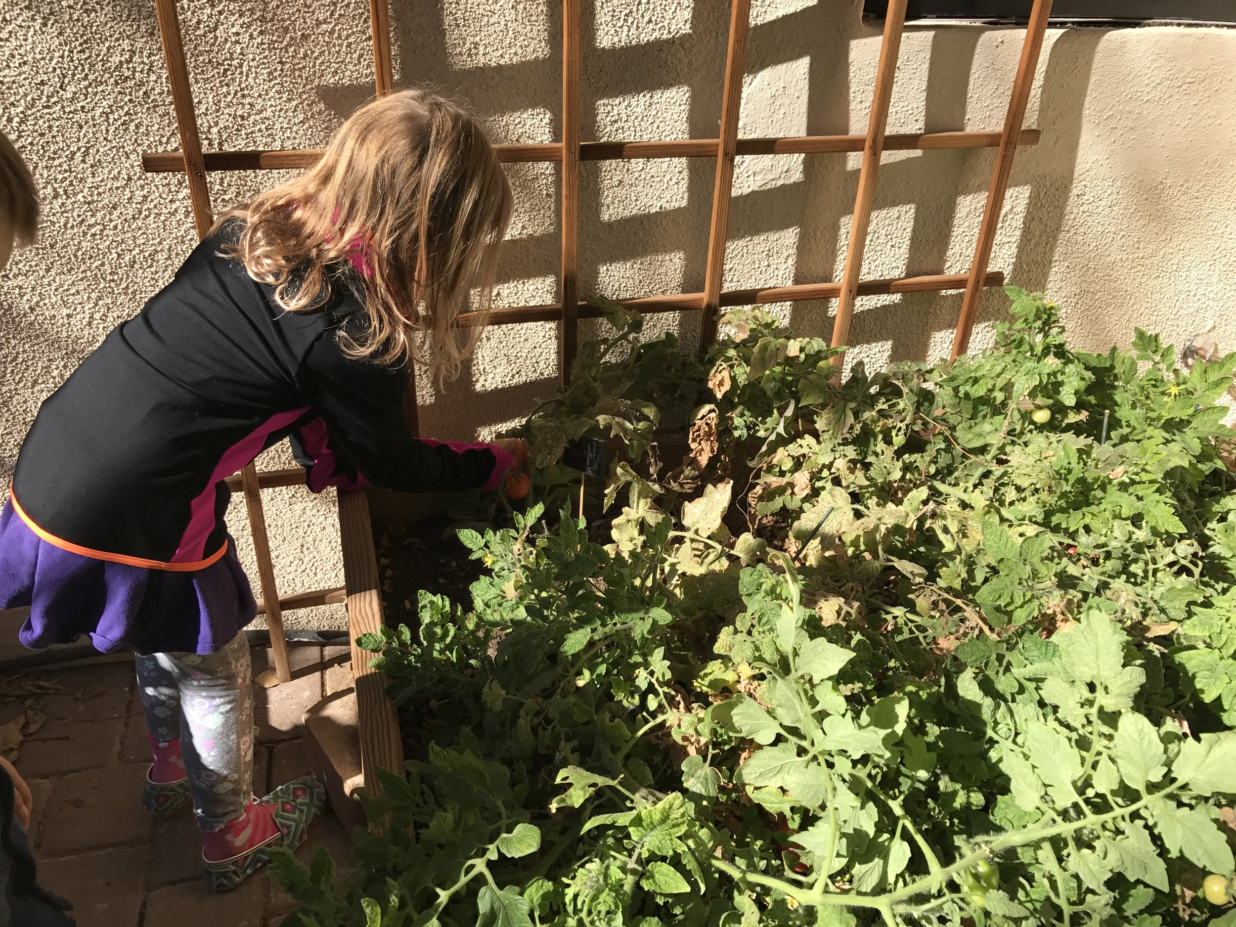 Visiting Our Community Garden