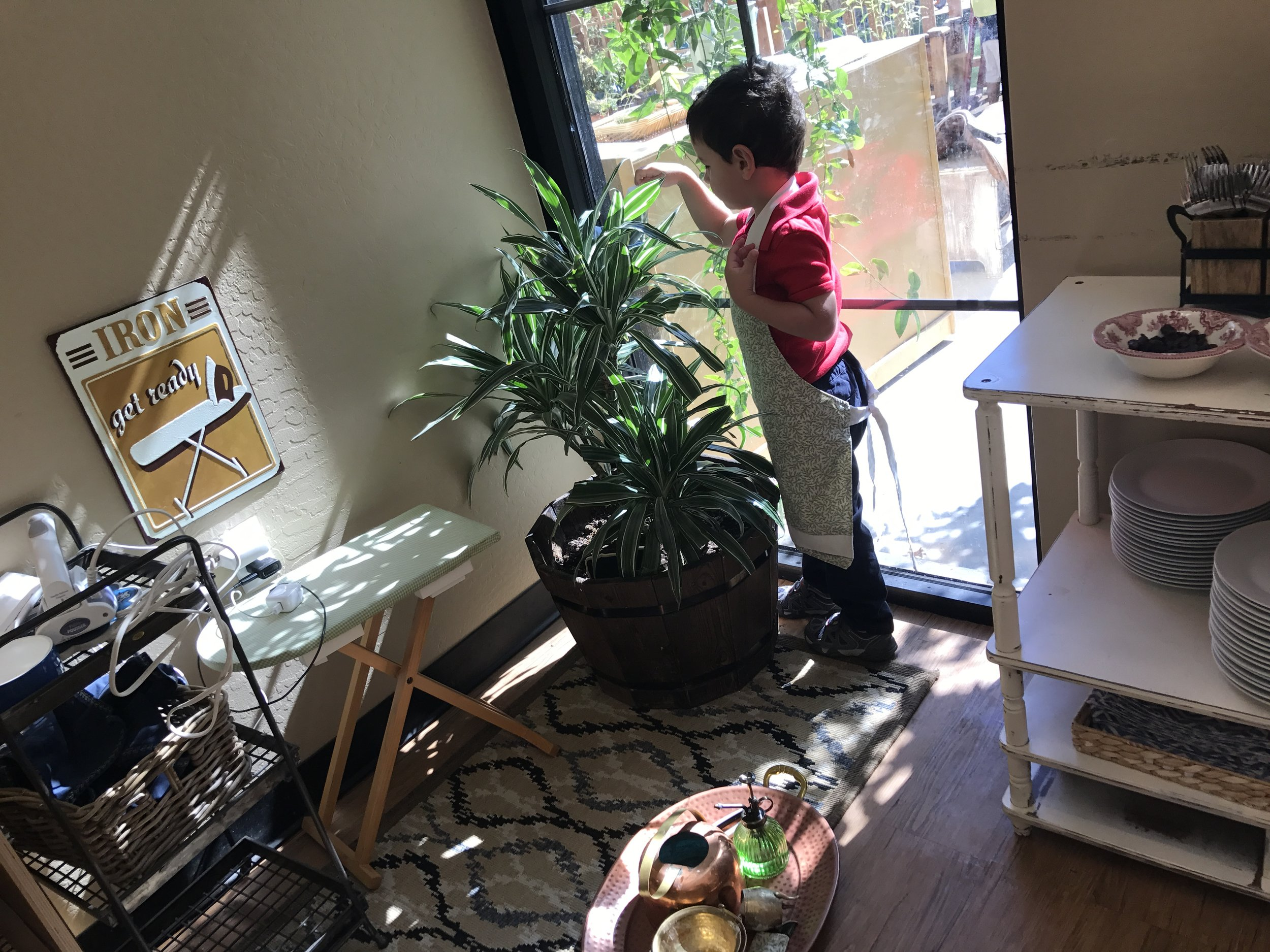Taking care of a plant