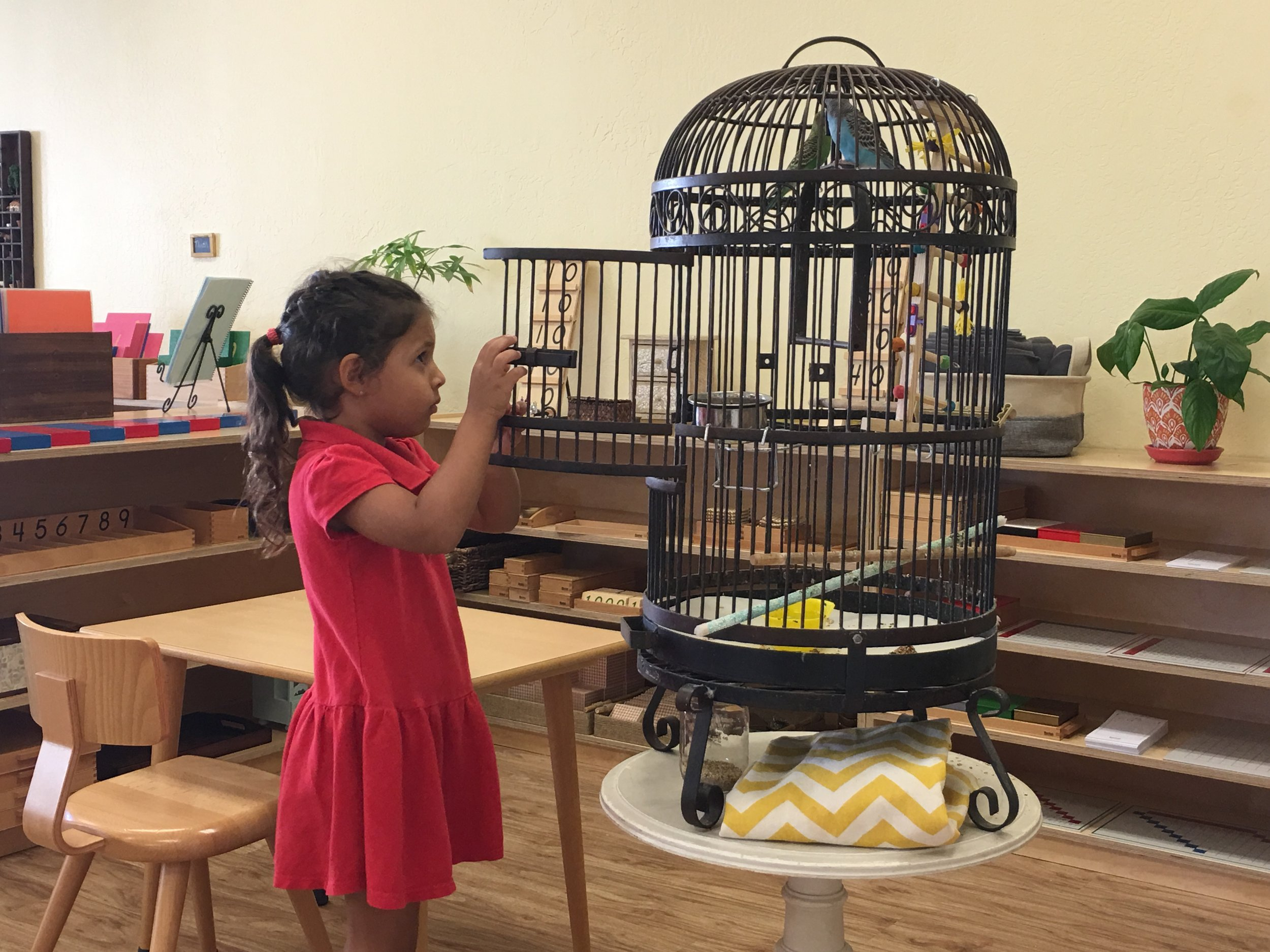 Caring for birds