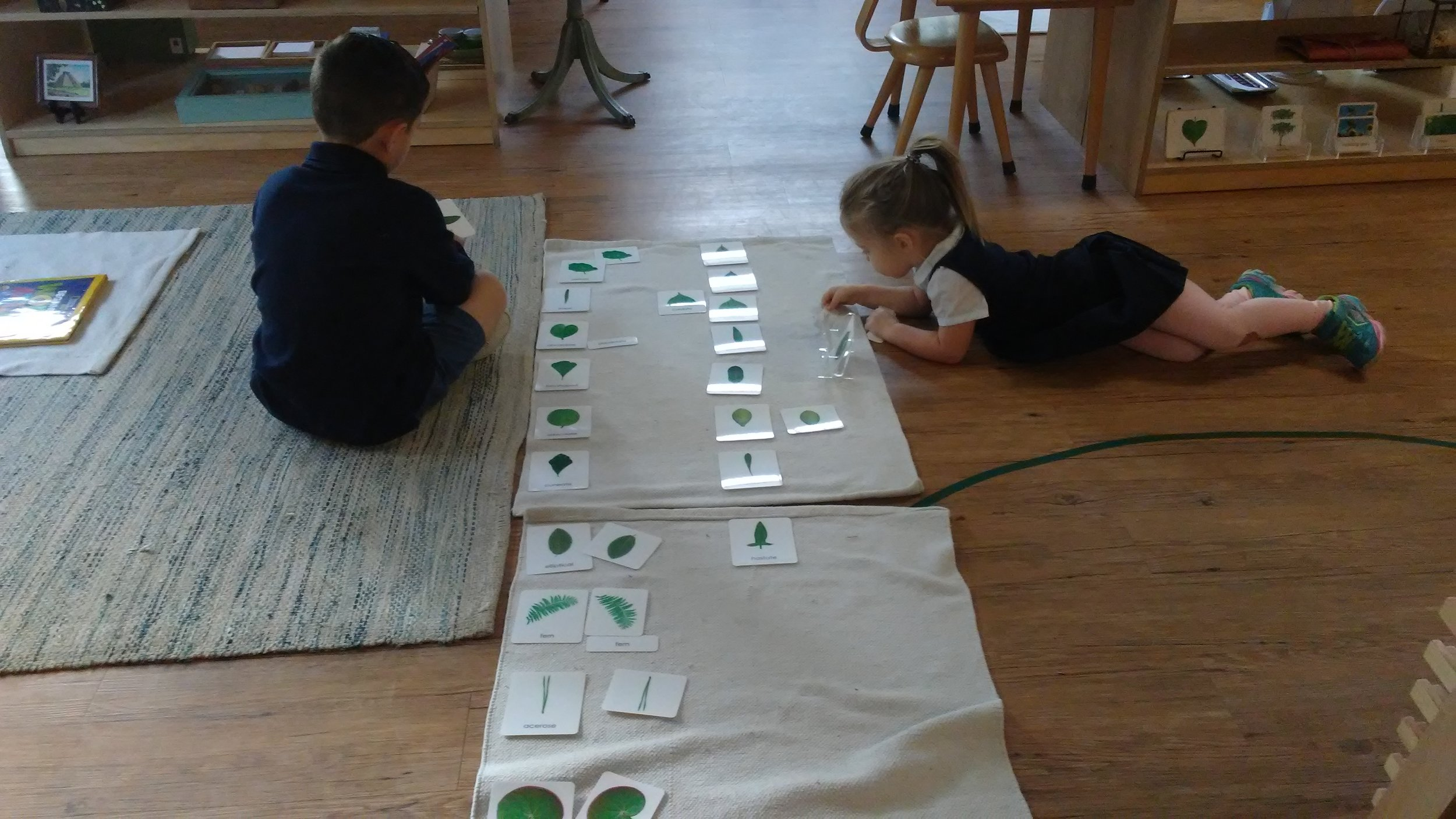 Botany 3 Part Cards