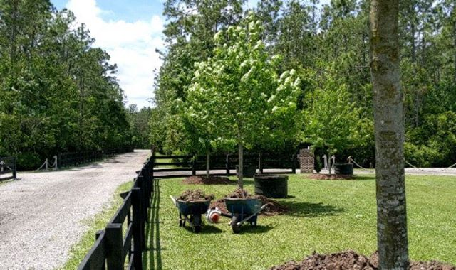 Out at the iconic Tringali Barn property south of St. Augustine implementing the first of several enhancements to the property, the planting of 26 Nuttal Oaks lining the entrance drive. #landscapearchitecture #staugustine @floridashistoriccoast @staugsocial @staugustinebuzz  @totallystaugustine