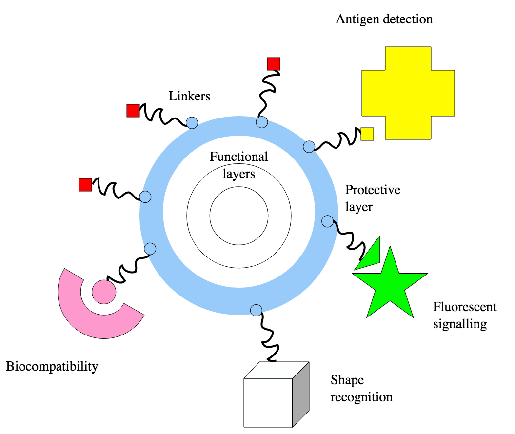 """""""Nanoparticles biomolecule interaction"""" by OV Salata; vectorised by NikNaks - Vectorised version of image from Journal of Nanobiotechnology http://www.jnanobiotechnology.com/content/2/1/3. Licensed under CC BY-SA 3.0"""
