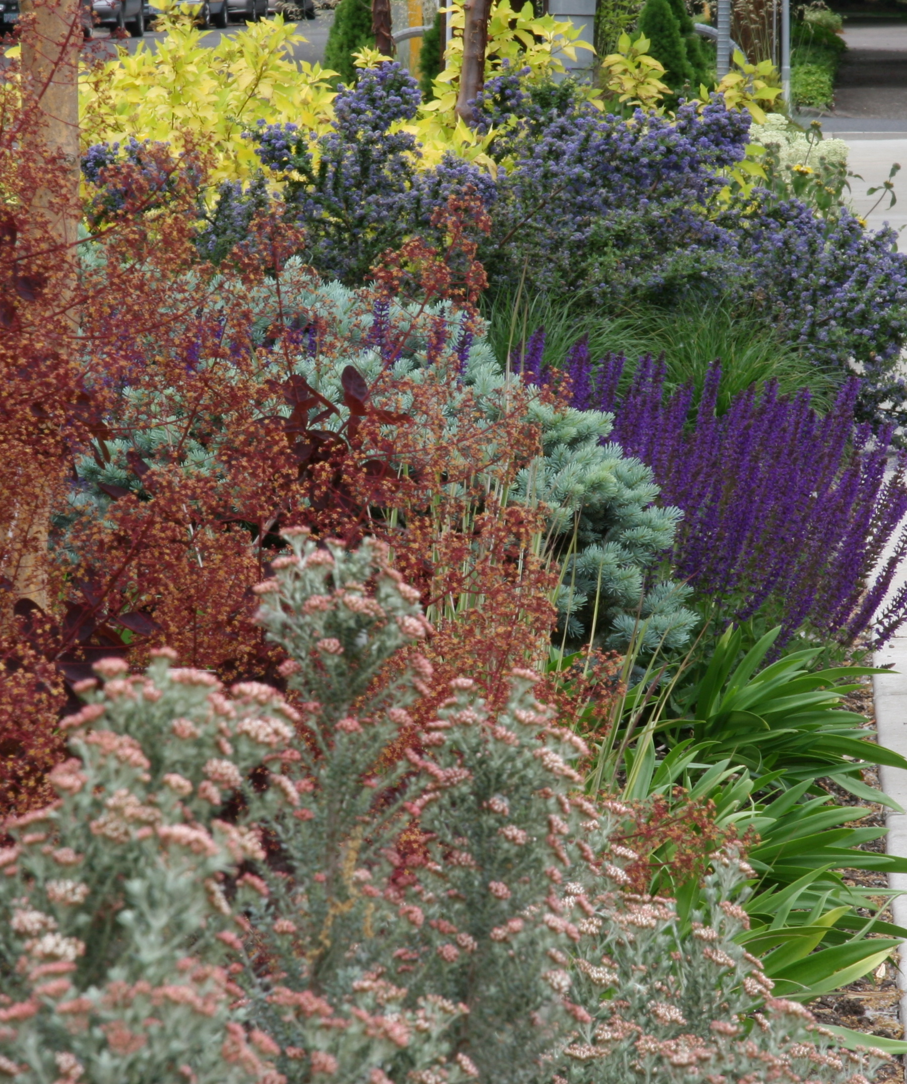 A not-so-boring drought tolerant landscape.