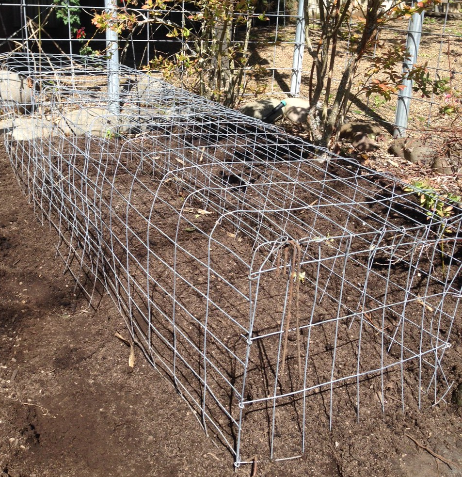 A dog, cat and racoon deterring cage for vegetable seedlings.
