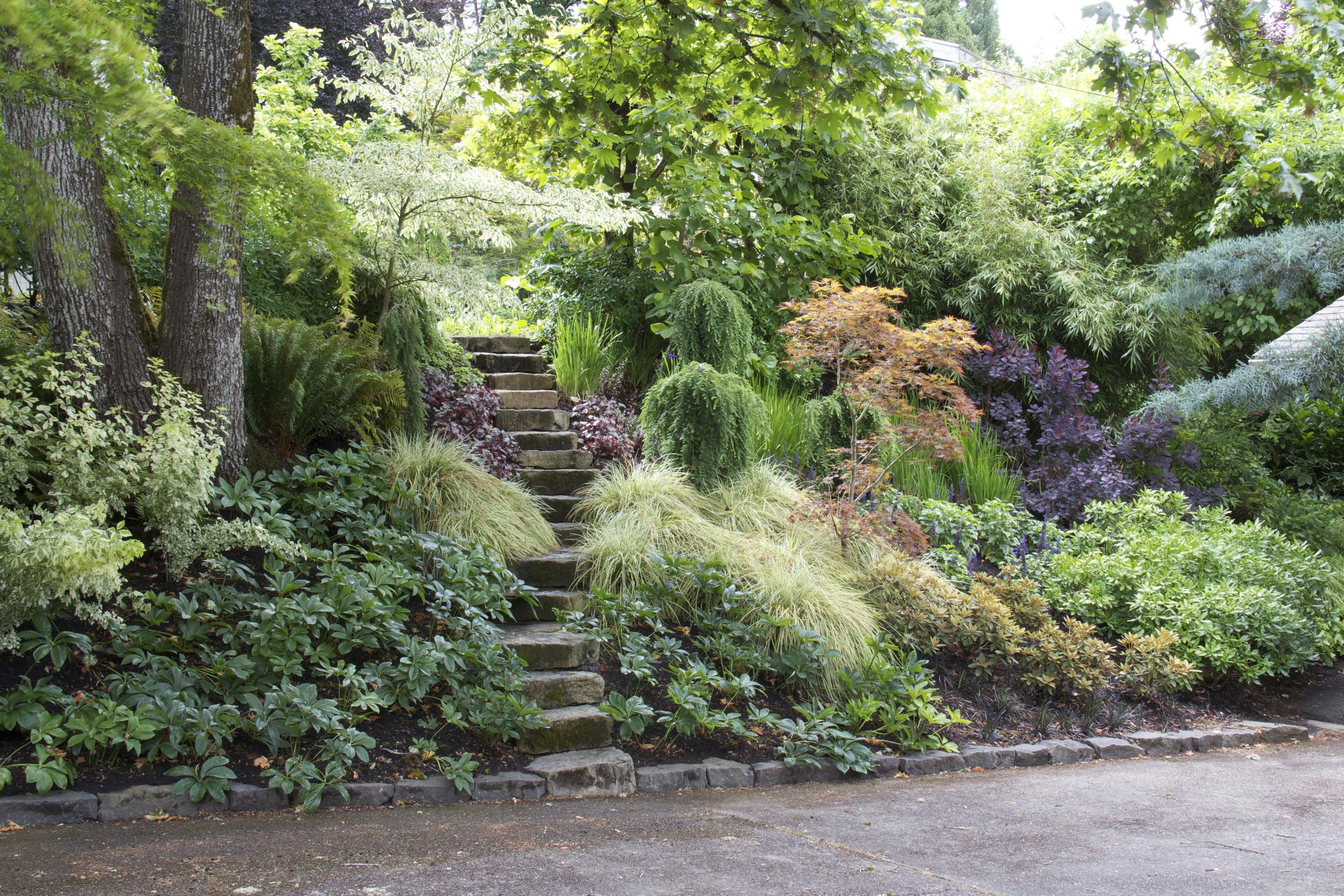 shady hillside garden
