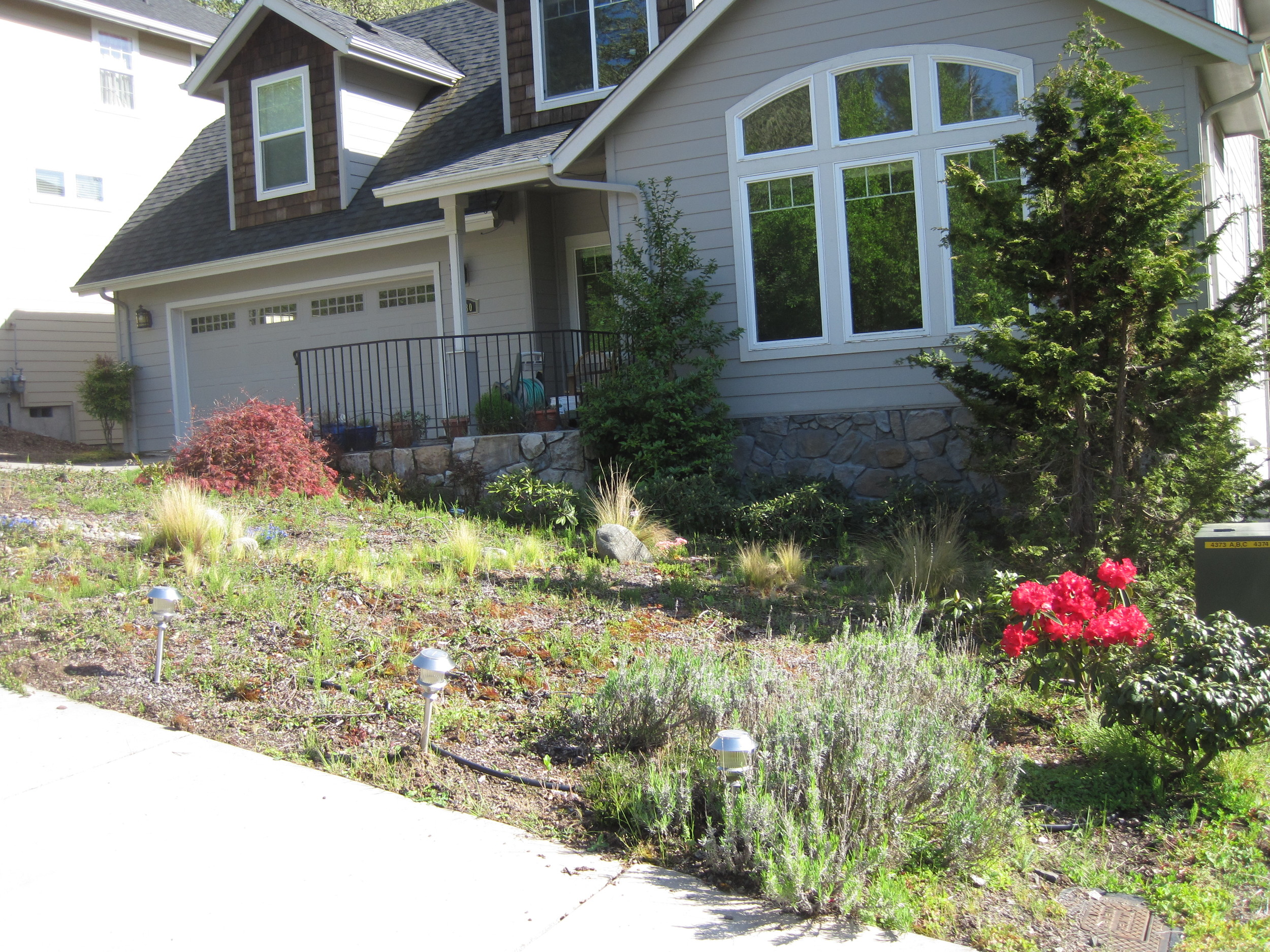 Before: low, sparse plantings were overwhelmed by the facade of the house and the driveway.