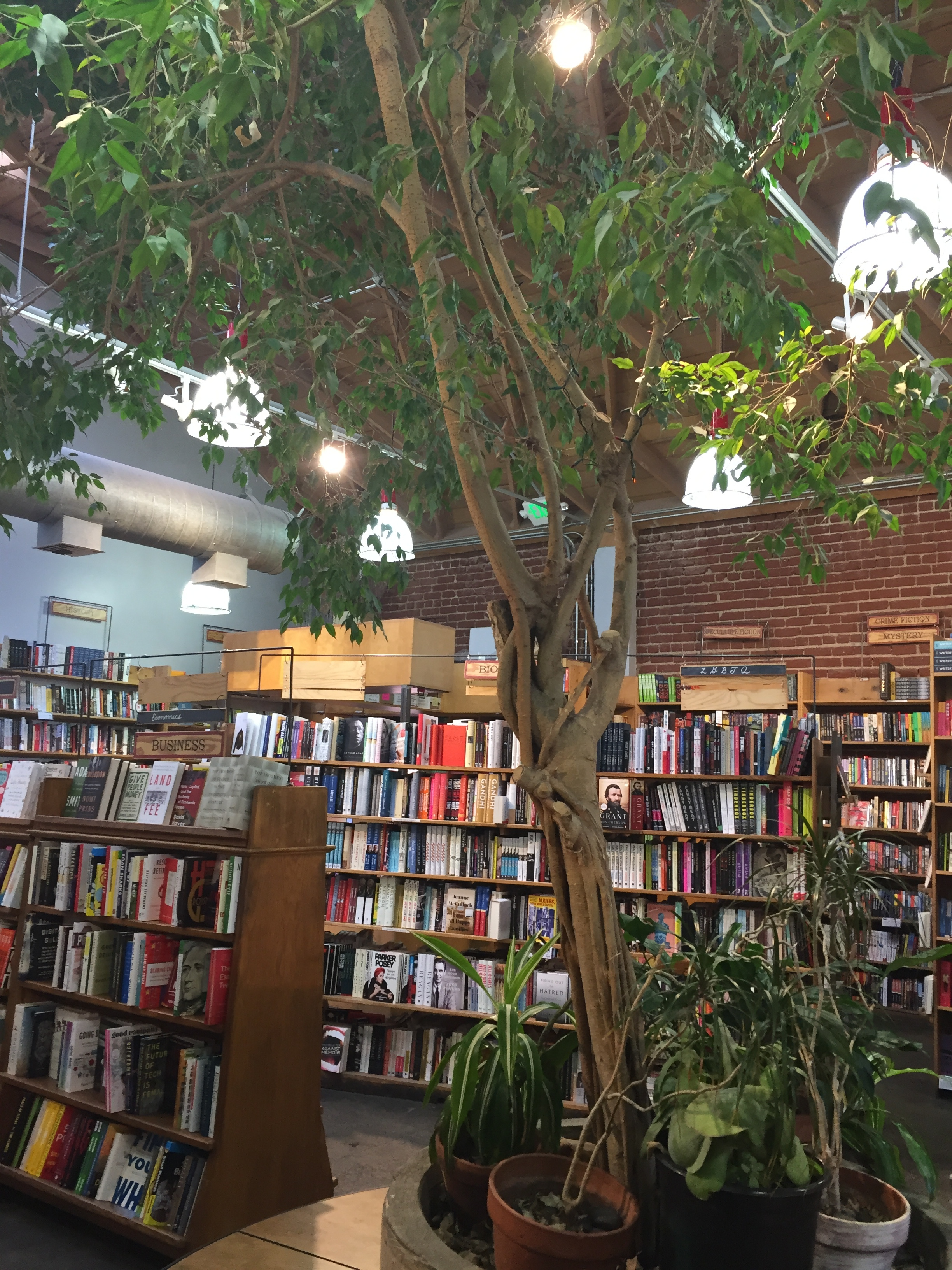 [image description: The inside of Skylight Books. A large tree grows inside the building and there's a circular bench around the tree's base. Behind the tree are several bookshelves and hanging lights.]