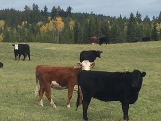 Double G Cattle Co 2.JPG