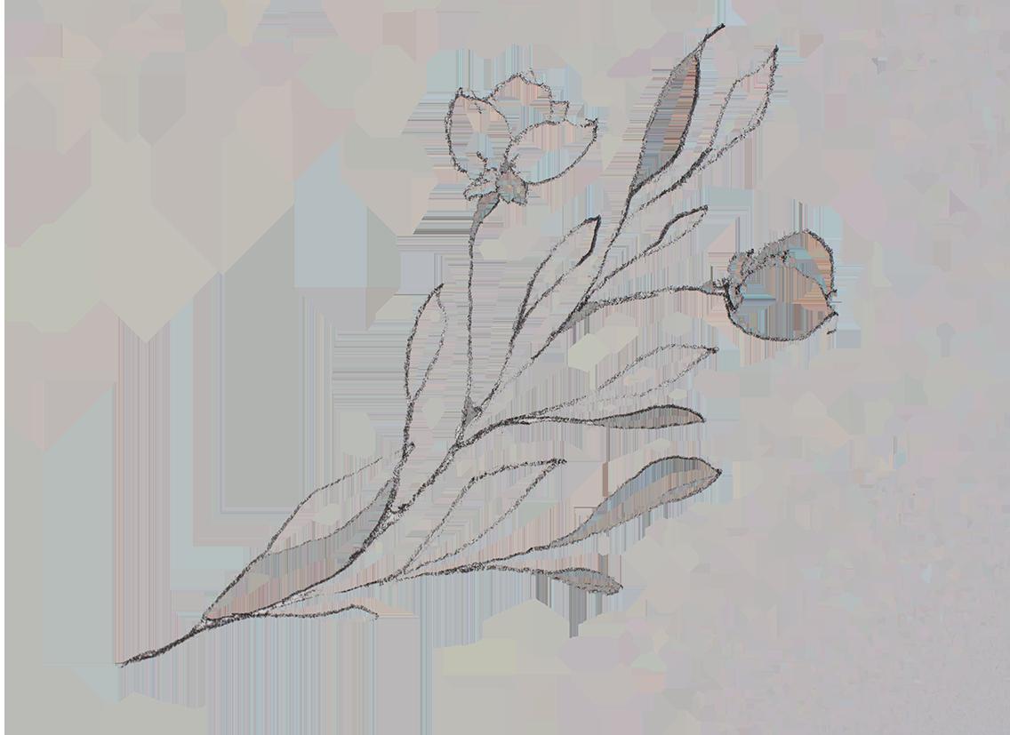 floral-sketch-01-web.png