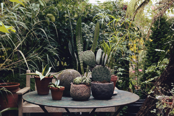 The_Garden_Edit_cacti_and_succulents.jpg