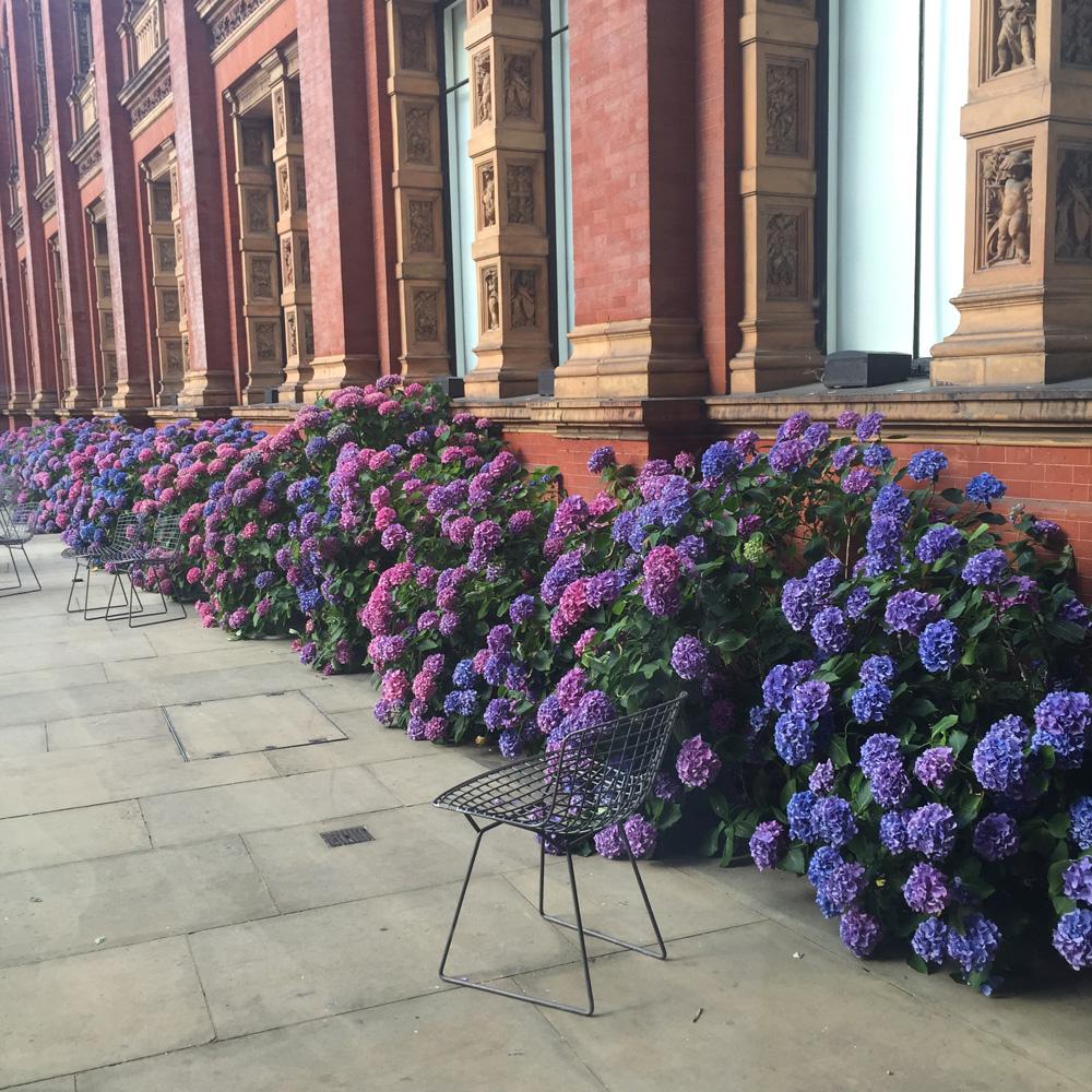 Hydrangeas at the V&A Museum | Design Hunter
