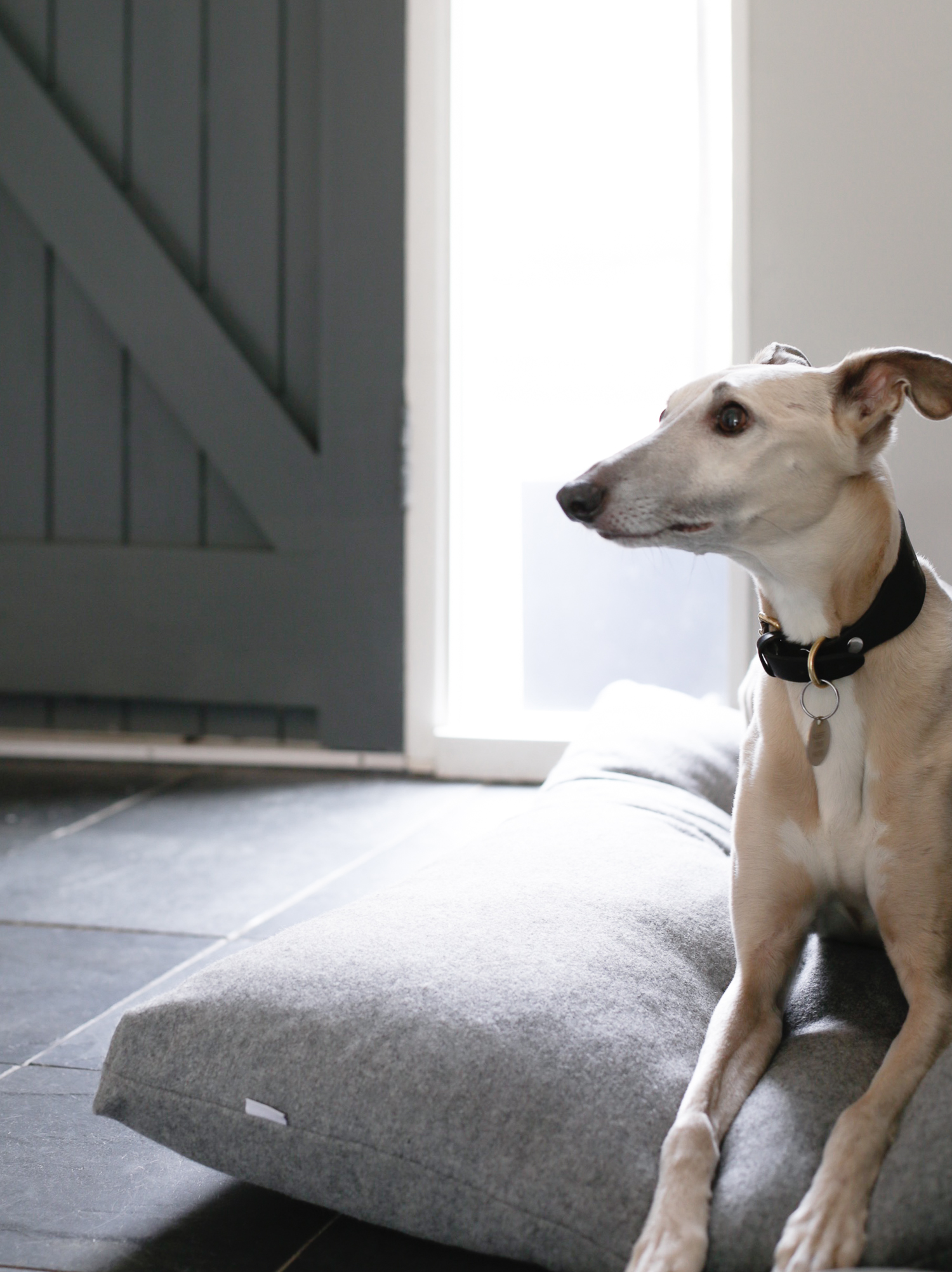 Kind for Dogs - Design Hunter